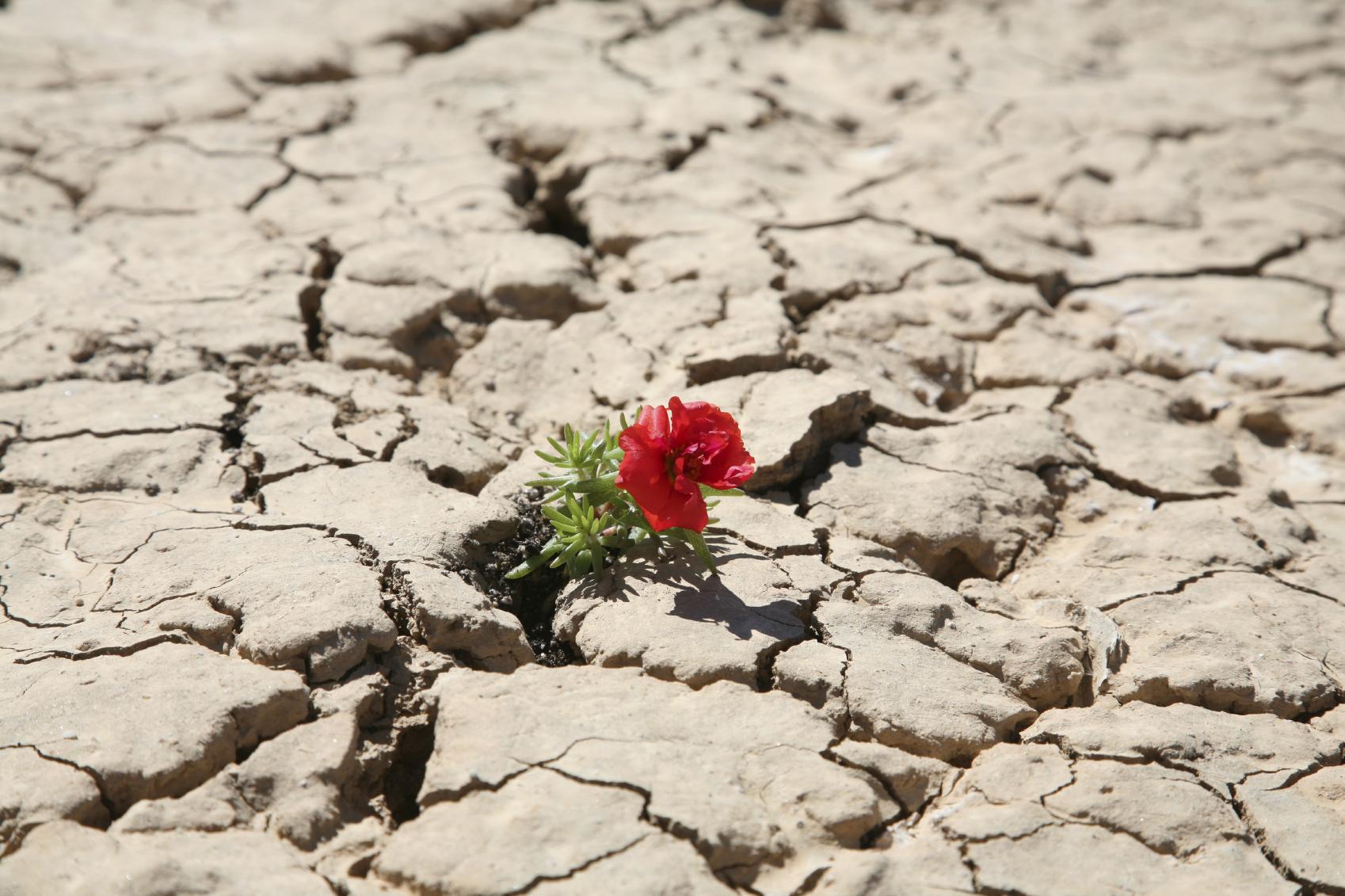 istock_flower_in_desert_med-1