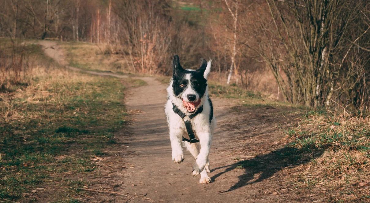 Spot Run